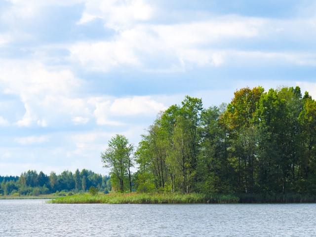 Port Union Area Blog: Trees image